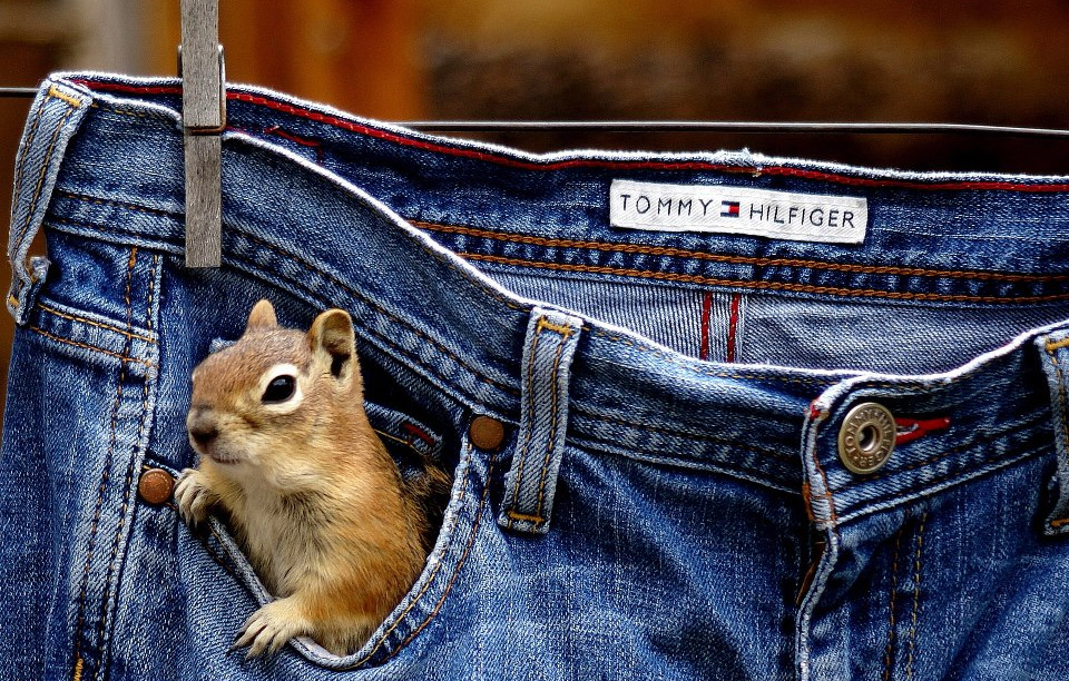 squirrel-in-my-pocket