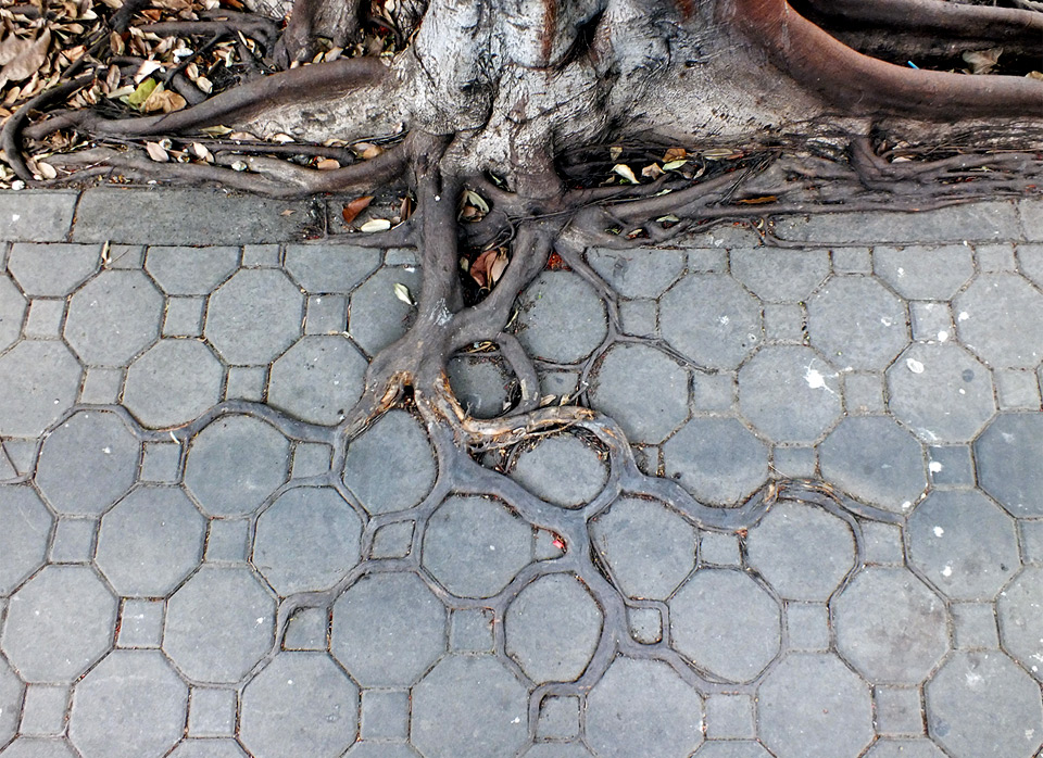 adaptive-roots-in-concrete-jungle