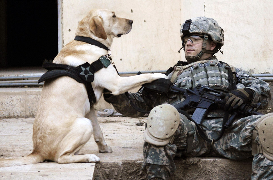 a-soldier-and-his-dog-in-iraq